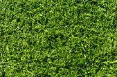 Sahte çim futbol, beyzbol, golf spor alanları kullanılan ve — Stok fotoğraf