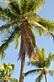 Palm Tree Background — Stock Photo