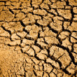 Stock Photo: Cracked Ground Dirt
