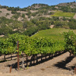 Napa Valley California Winery — Stock Photo