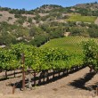 Stock Photo: Napa Valley California Winery