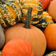 Pumpkins and Gourds — Stock Photo