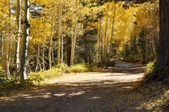 Autumn Trees and Dirt Road — Stock Photo