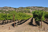 Napa Valley Vineyard — ストック写真