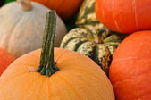 Pumpkins Close Up — Stock Photo