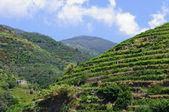 тоскана италия горы виноградник — Стоковое фото