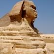 Sphinx against pyramids — Stock Photo