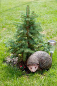 Hedgehog under a pine. — Stock Photo