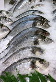 Fresh fish ( dorade ) on ice — Stock Photo