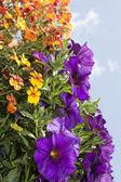 Mixed flowers — Stock Photo