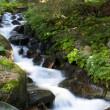 Stream in the woods — Stock Photo #11563003