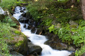 Stream in the woods — Stock Photo