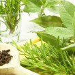 Stock Photo: Aromatic herb