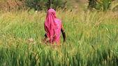 Woman Farming — Stock Photo