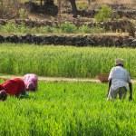 Women Farming — Stock Photo