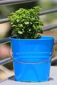 Green plant in a blue bucket on the terrace — Stock Photo