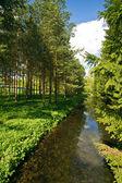 Güneşli yaz park — Stok fotoğraf
