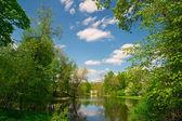 Güneşli bir yürüyüş parkı — Stok fotoğraf