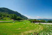 Green meadow in the village — Stock Photo