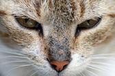 Eyes of cat — Stock Photo