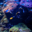 Coral in Aquarium — Stockfoto