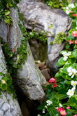Vines growin accross rocks — Stock Photo