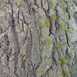 Wood bark texture - Stockfoto