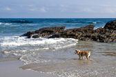 Les chiens ont aussi des vacances — Photo