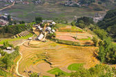 Rice terraced fields in hill tribe village — Stock Photo