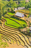 Vietnamese rice terraced fields — Stock Photo
