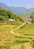 террасные поля риса — Стоковое фото