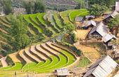 Rice terraced fields — Stock Photo