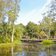 Peat swamp forest - Stock Photo
