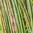 Stock Photo: Bamboo 43