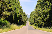 Cypress avenue longest from Italy 03 — Stock Photo