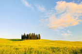Toskana Wald - Tuscany forest 08 — Stock Photo