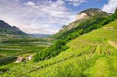 Trentino 01 — Stock Photo