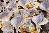 Stockfish 04 — Stock Photo