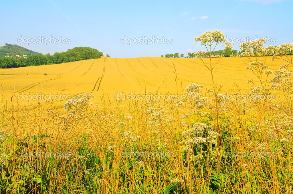 Field 58 — Stock Photo #11413216