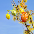 Hamamelis shrub in easter time 01 - Stock Photo