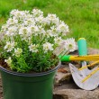 Stock Photo: Shrub planting 20