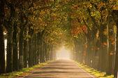 Avenue in fall 21 — Stock Photo