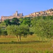 Assisi 11 — Stock Photo #11537548