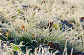 Grass with hoarfrost 01 — Stock Photo