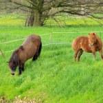 Pony 07 — Stock Photo