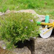 Stock Photo: Shrub planting 01