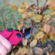 Stock Photo: Shrub cutting 05