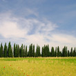 Stock Photo: Cypress avenue 02