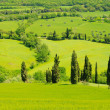 Stock Photo: Cypress curve 17