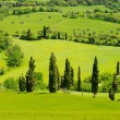 Stock Photo: Cypress curve 18